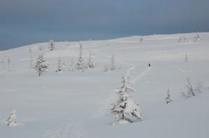 Veslefjell skispor
