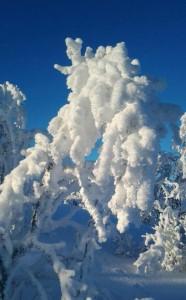 Vinterbilde Vassfarfjellet
