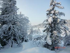 Vinterstemning ved Raufjelltjern